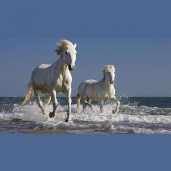 Scorp tech in CHENNAI, Chennai