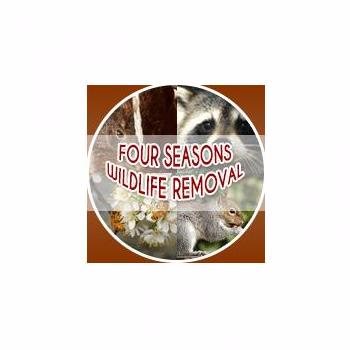 Four Seasons Wildlife Removal - Raccoon Removal Toronto in Toronto
