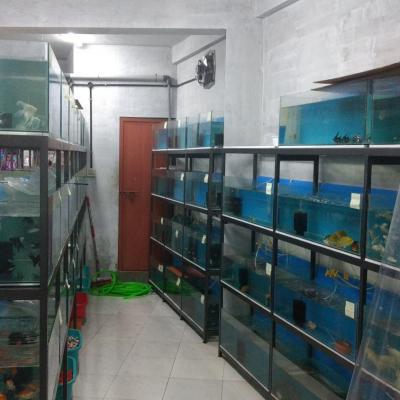 Golden Fins Aqua and Pet store