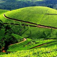 Munnar at Wild Kerala Tours in Cochin