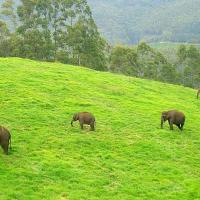 Thekkady at Olive Vacations in Kothamangalam