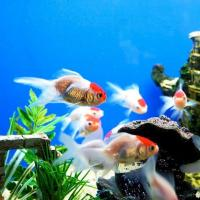 Aquarium Fishes at Anitha Aquarium in Kalady